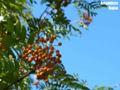 träd med orangea bär