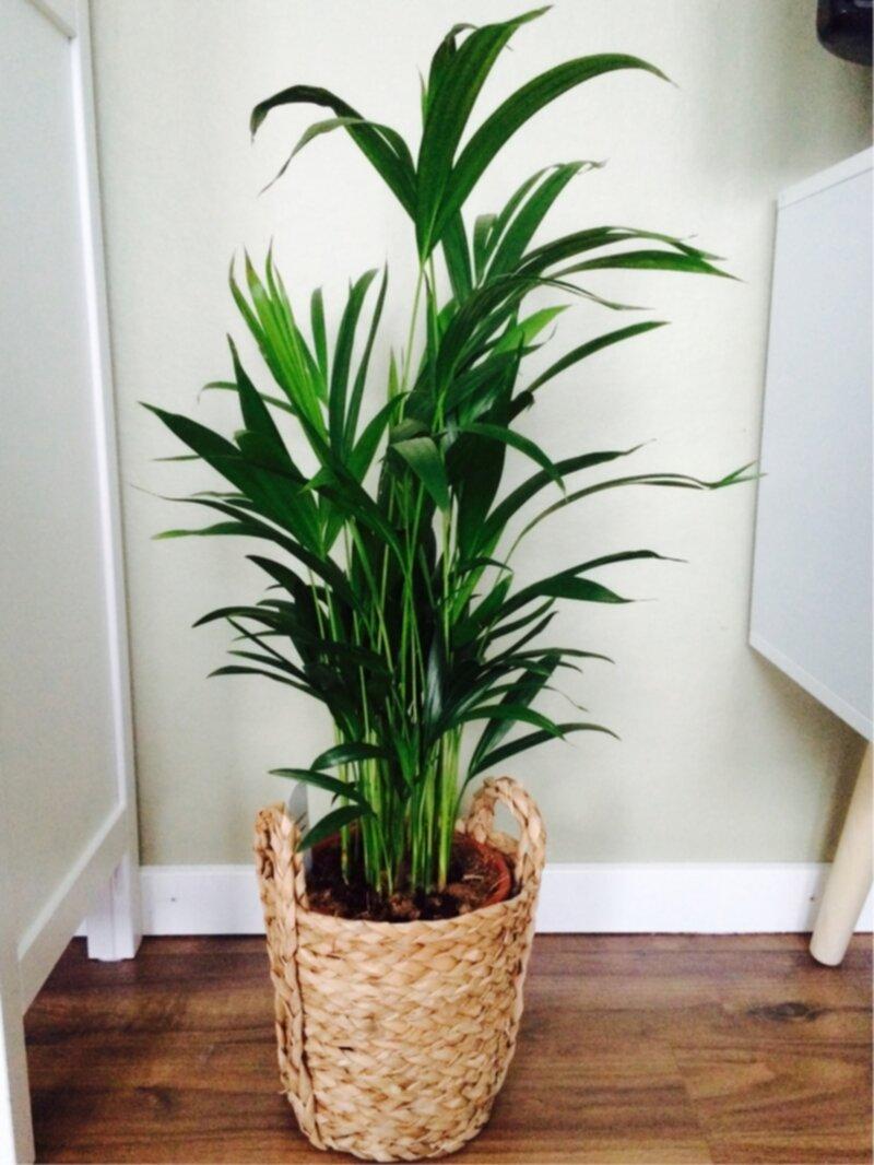 gröna växter bilder