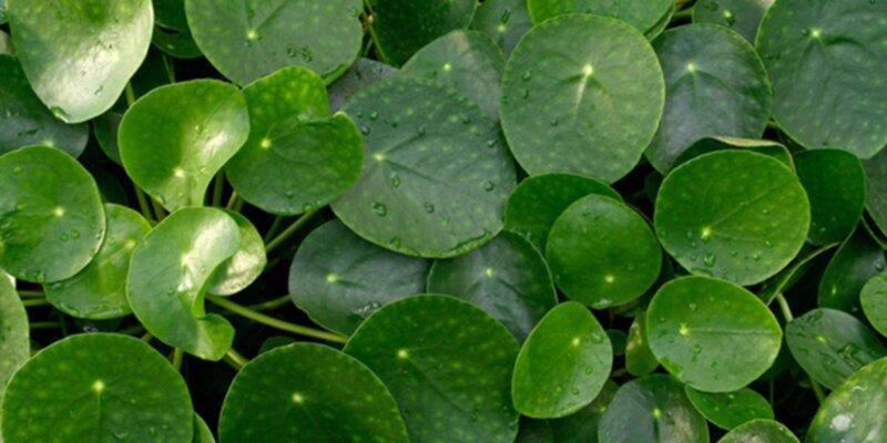 gröna växter som kan stå mörkt
