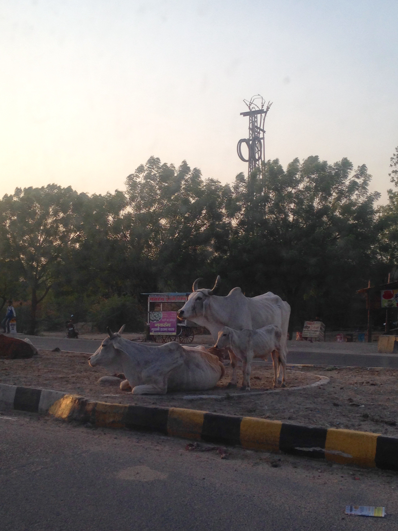 Jodhpur Fick